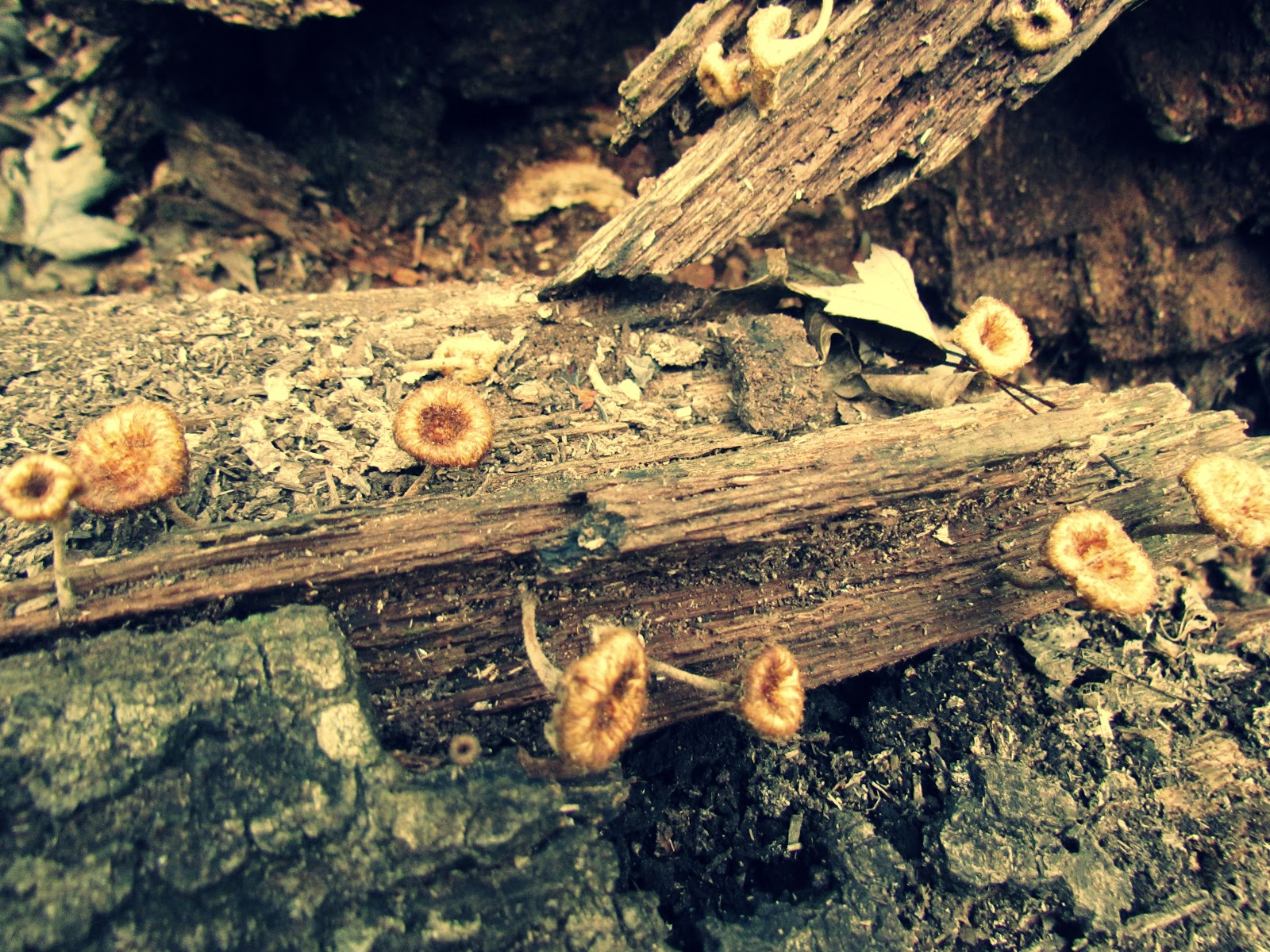Mushrooms and Tree Bark Growing Wildly Edible Mushrooms for Foraging