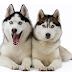 Adestramento de Cães em BH | Principais atividades desenvolvidas no processo de treinamento