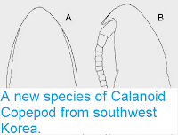 http://sciencythoughts.blogspot.co.uk/2014/11/a-new-species-of-calanoid-copepod-from.html