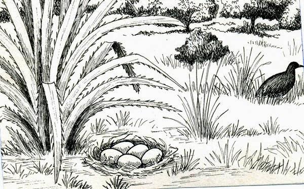 nido de Tataupa comun Crypturellus tataupa