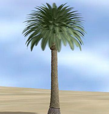 http://3.bp.blogspot.com/-D-_iz--dycA/UId1G44xT_I/AAAAAAAABMc/rIrEJI5WNIY/s320/pohon+kurma1.JPG