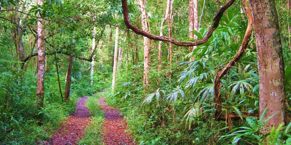 Resultado de imagen para ecosistema tropical