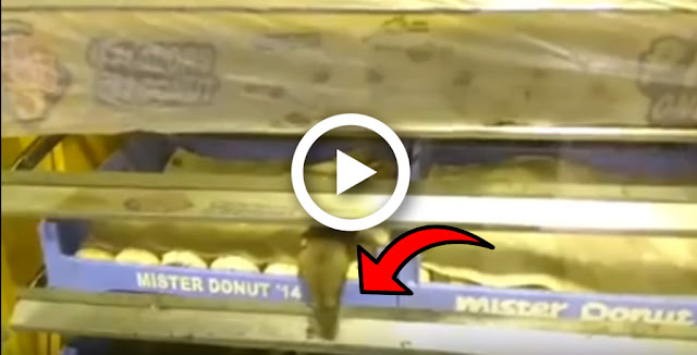 Watch: Mouse Seen Lurking and Nibbling Doughnuts -- so Disgusting!