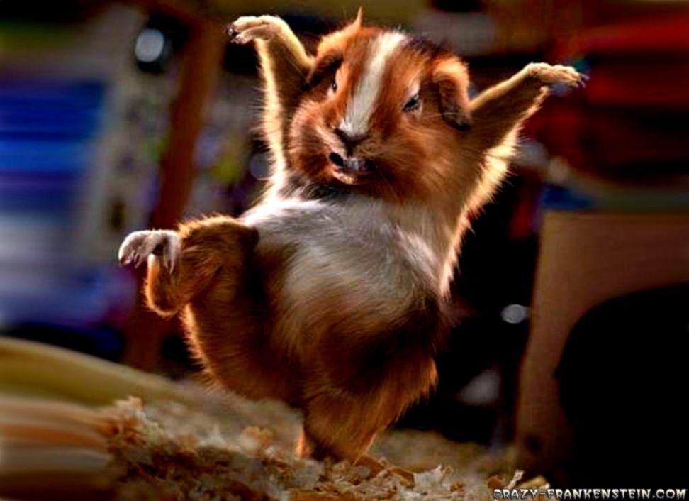 Cute Animal Screensavers | Views Wallpapers
