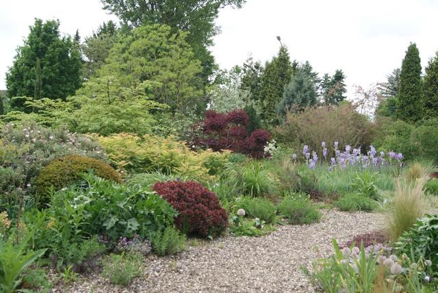 Filz und garten gartenblog ein kies und schattengarten for Peter janke design mit pflanzen