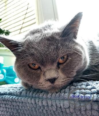 Adzik tworzy - kocie zęby pielęgnacja żel Fresh Aid