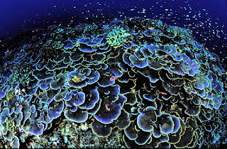coral reef tourism, coral reef, USFWS