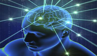 human brain - thaimedicals.blogspot.com