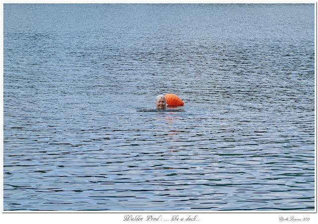 Walden Pond: ... like a duck...
