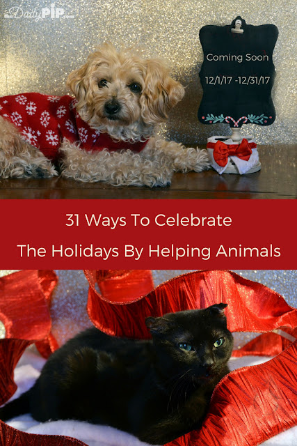 31 Ways (in 31 Days) To Celebrate the Holidays By Helping Animals