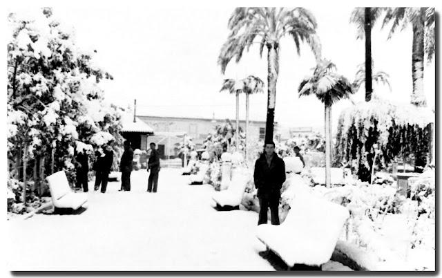 Palmeras nevadas en El Arenal