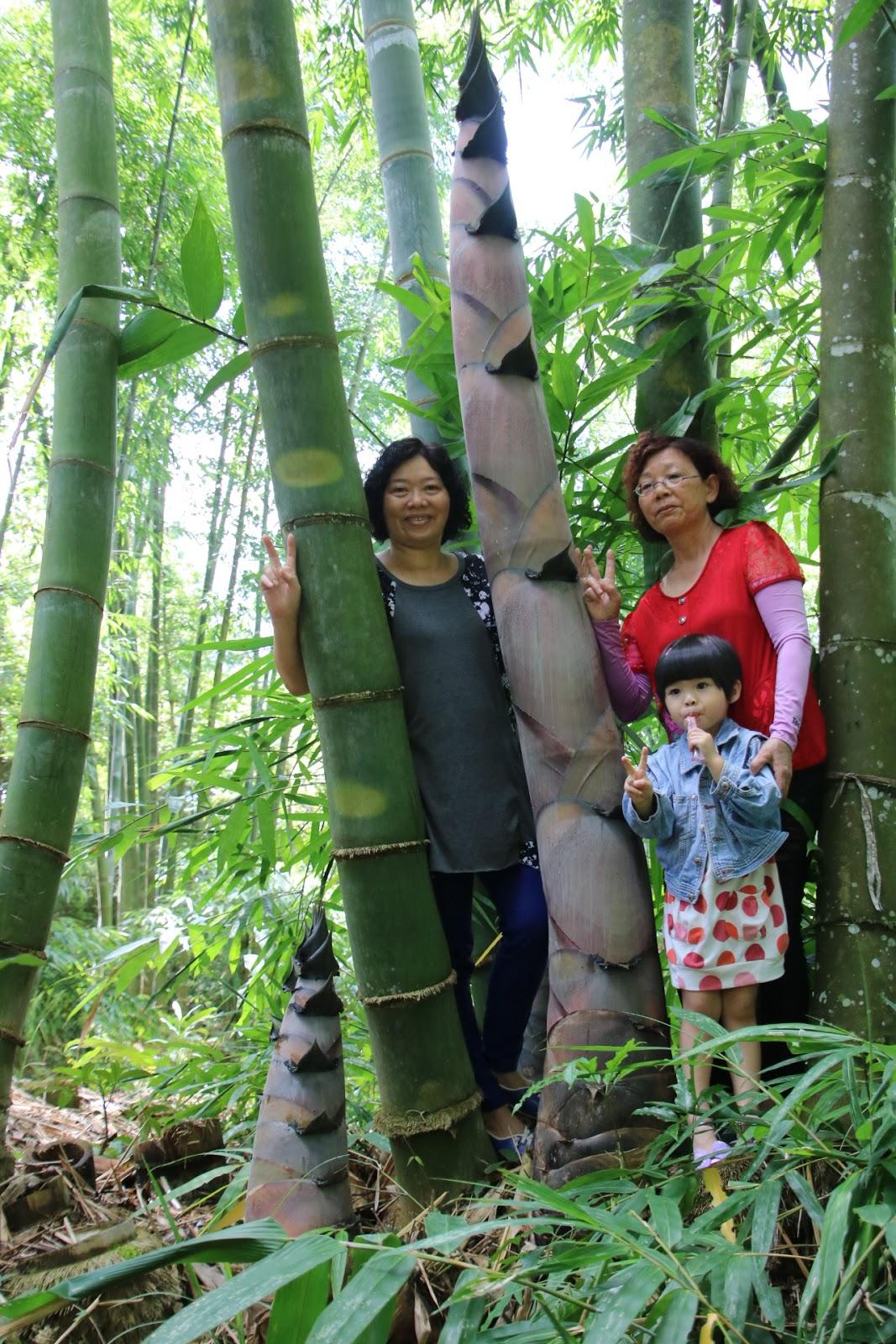 埔里報導雜誌: 林試所蓮華池 巨竹筍大如水桶