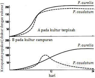 Grafik populasi Paramaecium aurelia dan P. caudatum yang dikultur secara terpisah dan bersama