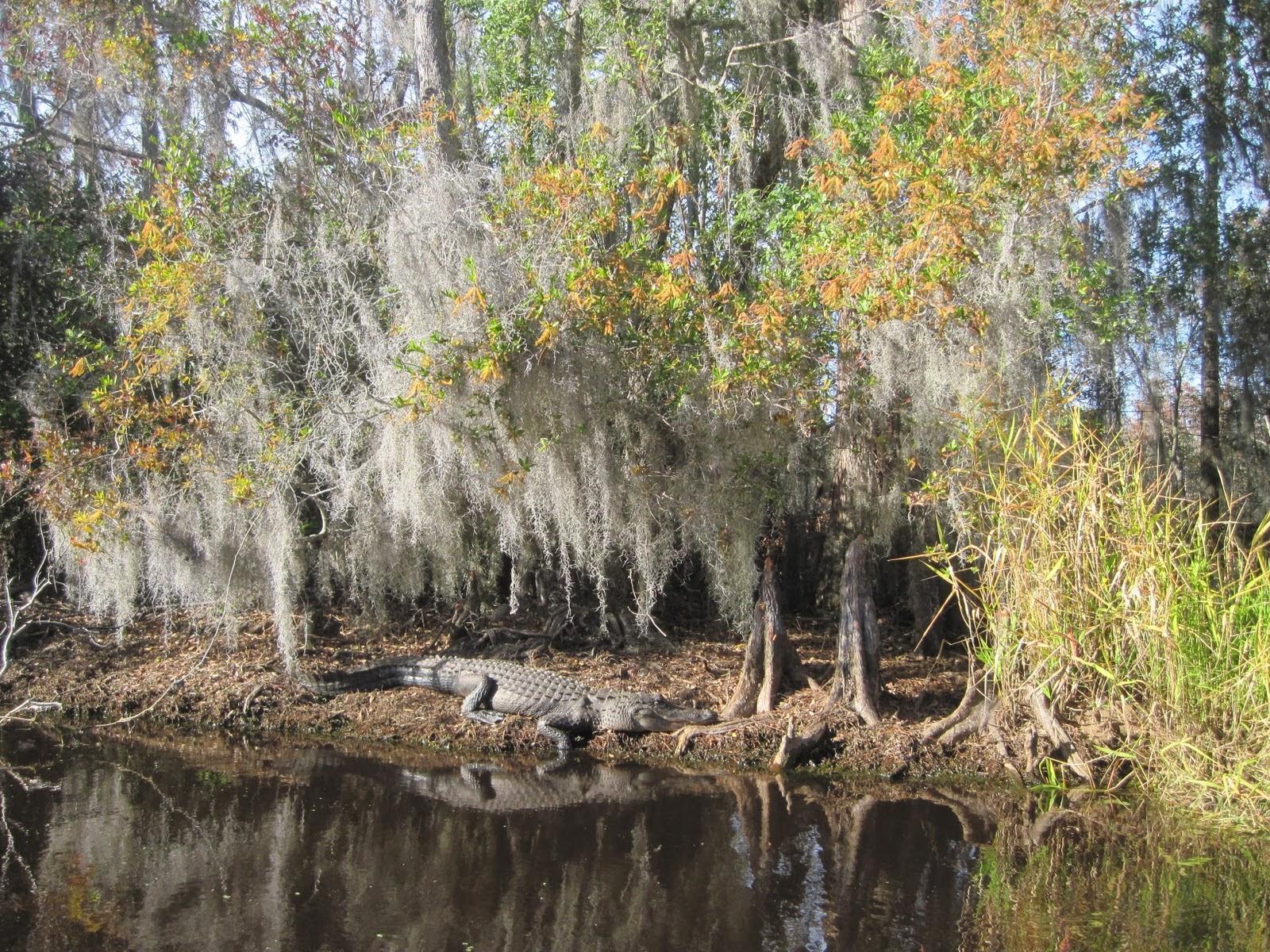 Gt Dart At The Map Okefenokee Swamp Georgia U S A