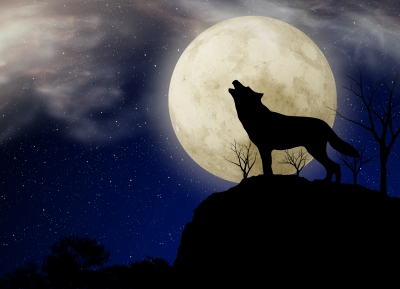 "Image ""Wolf and Moon"" courtesy of nixxphotography at www.freedigitalphotos.net"