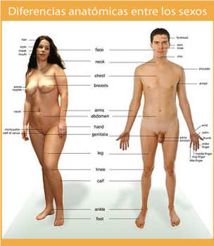 Dibujando Hombres Desnudos - Porno