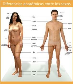 Zonas erogenas de la mujer