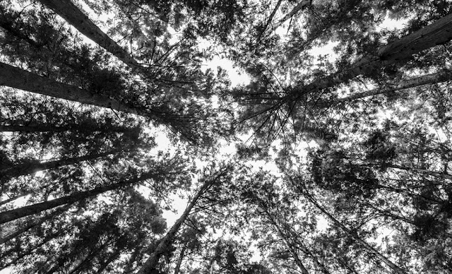 El cielo desde el camino de Kumano :: Canon EOS5D MkIII | ISO200 | Canon 24-105@24mm | f/4.0 | 1/80s