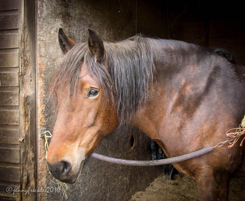 HORSE CHESTNUT SKIN CARE CREAM - Izmir Beauty  Chestnut Beauty