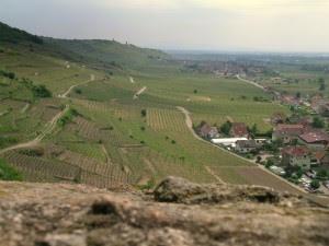 Alsace, France. A famous Gewürztrminer area.
