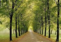 Hıyaban, iki yanı düzgün ağaçlı toprak yol