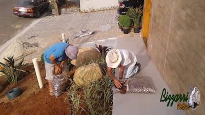 Bizzarri fazendo a execução do paisagismo com pedras ornamentais  do tipo pedra moledo, fazendo o canteiro com as agaves e as strelitzias com a barba de serpente. 7 de março de 2017.
