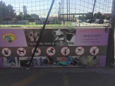 Campagne sur facebook contre une société de service à Rabat qui propose à ses clients la capture des chats et chiens errants!!