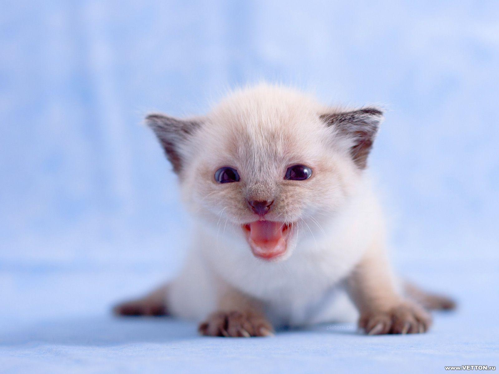 cute cat for 1440x900 - photo #36