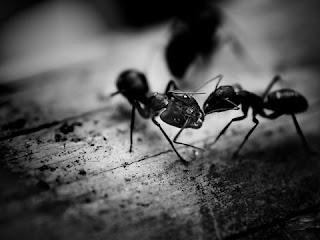 النمل فى المنام بالتفصيل