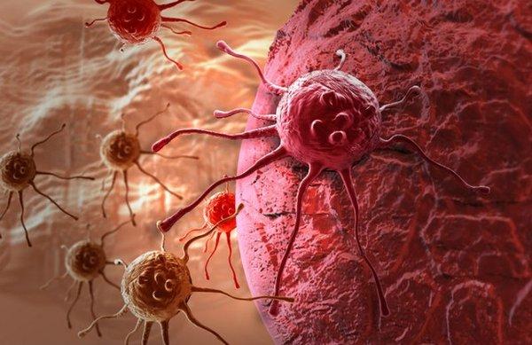 Chất Germanium trong linh chi có tác dụng ức chế tế bào ác tính