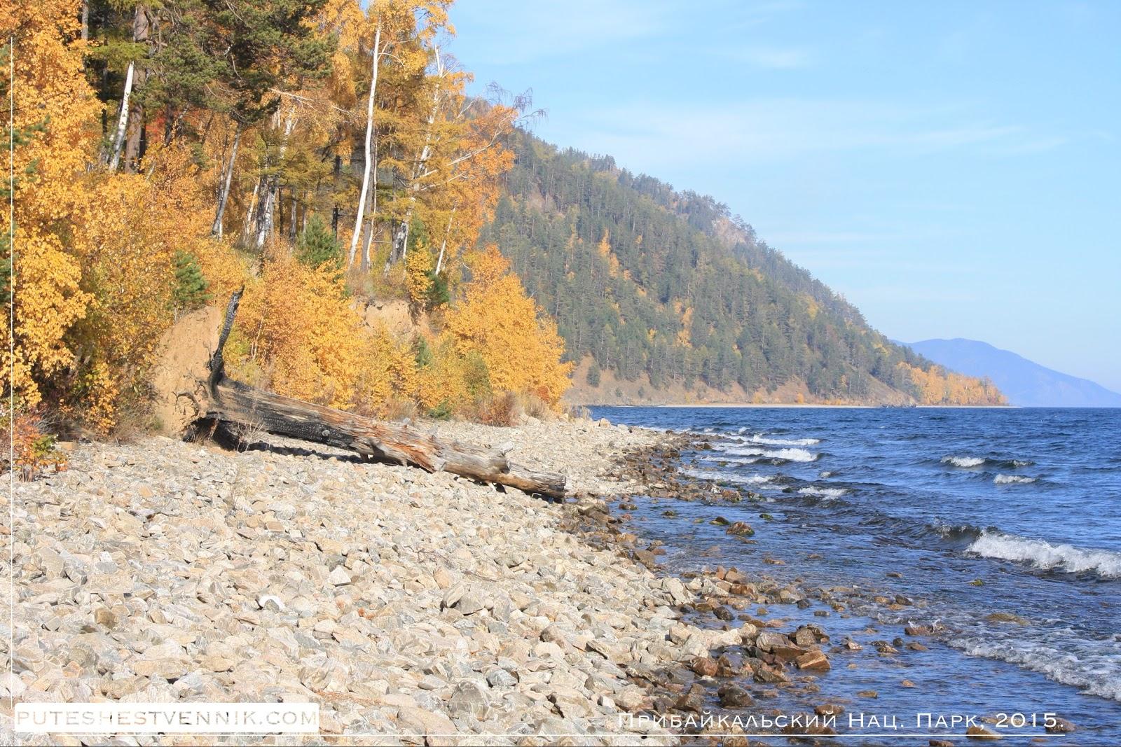 Волны Байкала и поваленное дерево