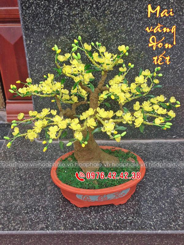 Goc bonsai cay hoa mai o Ngoc Lam