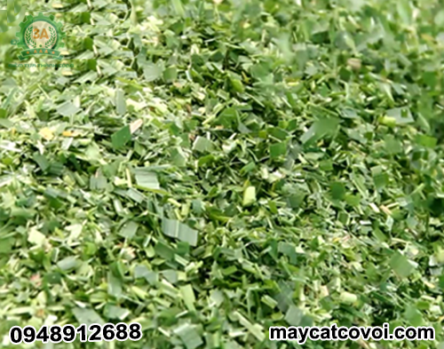 Sản phẩm cỏ sau khi băm bằng Máy băm cỏ di động 3A có độ dài từ 1 – 5 cm