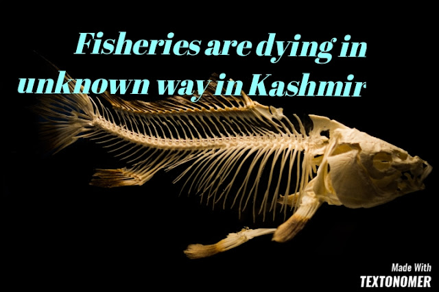 Fisheries are dying in unknown reasons in Kashmir