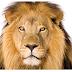 Cuidado com o Leão: Informes de Rendimento - Imposto de Renda - Fundos Imobiliários da VAM