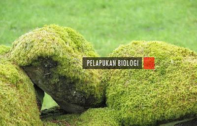 Contoh Jenis Pelapukan Biologi, Proses, dan Tahapannya