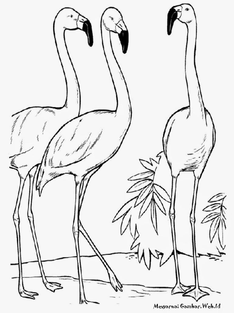 Gambar Sketsa Gambar Burung Merak Terbaru Gambarcoloring