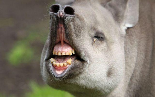 Động vật hài hước