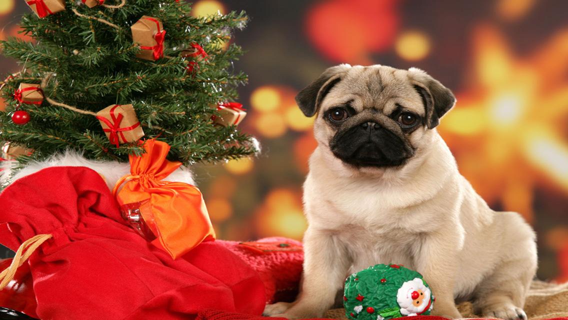 christmas puppy wallpaper - photo #17