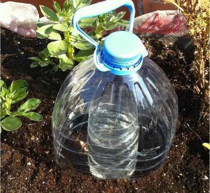 MelaZenzero: Innaffiare le piante riciclando i vuoti di plastica: coltivare l...