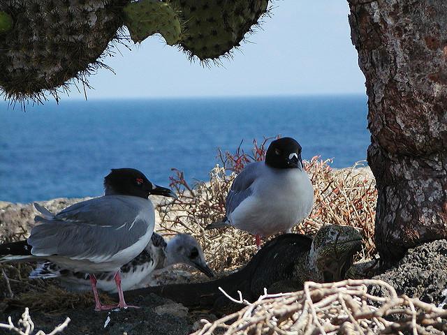 Galápagos Ecuador, considerada un laboratorio viviente!