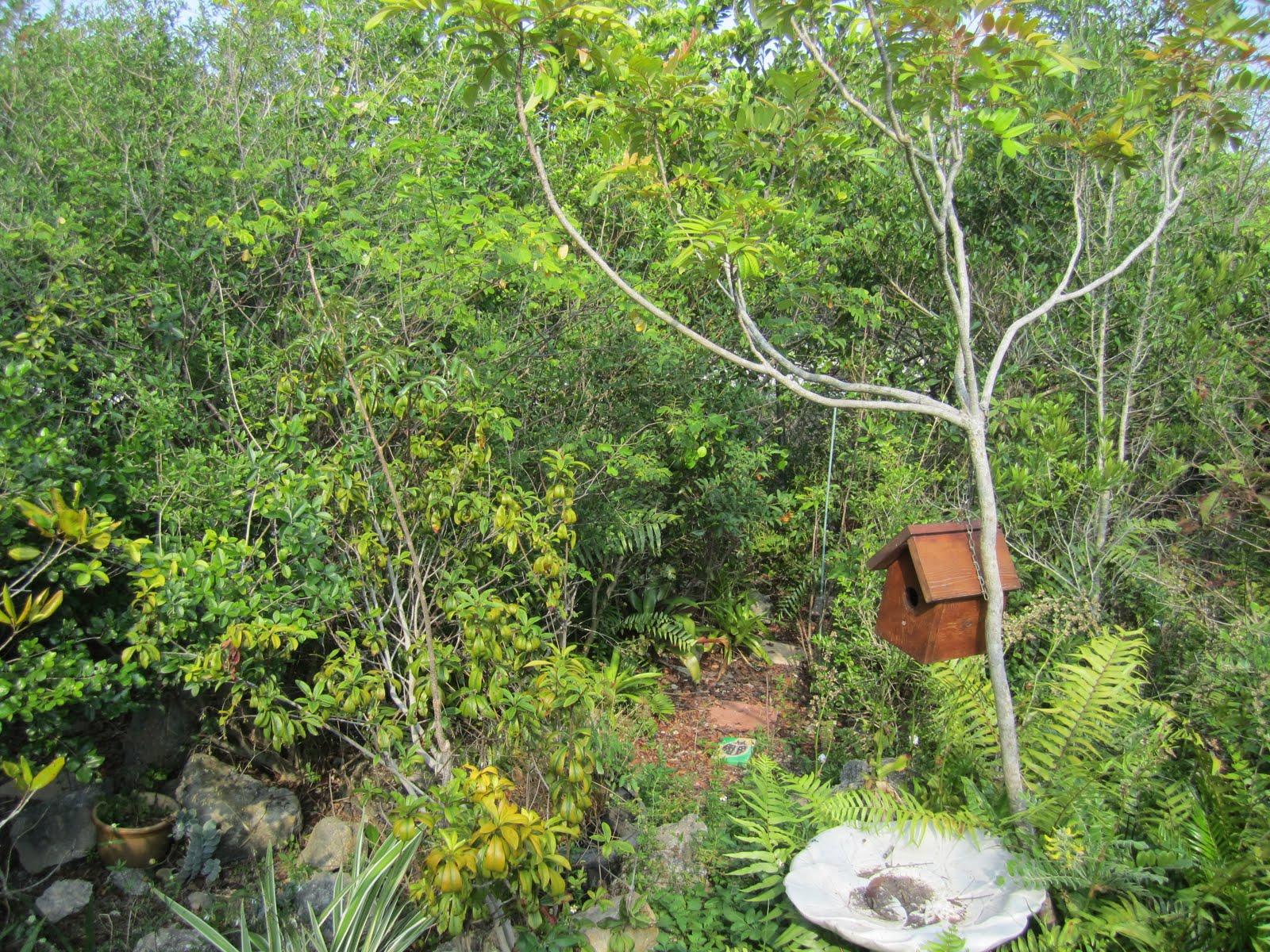 Sawgrass Nature Center Wildlife Hospital Coral Springs Fl