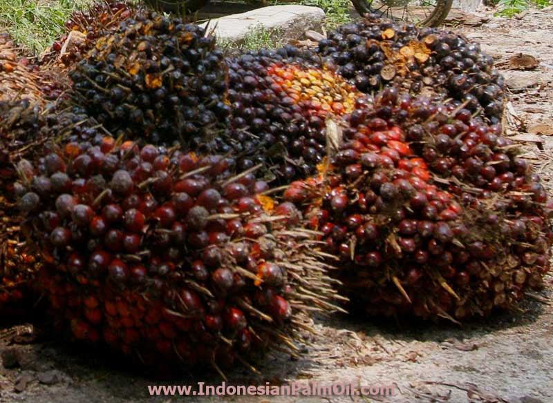 Higher Palm Oil Prices