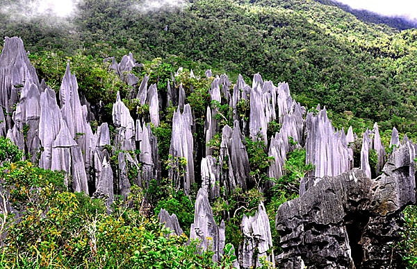 Mulu National Park Pinnacles