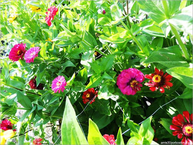 Applecrest Farm: Huertos de Flores