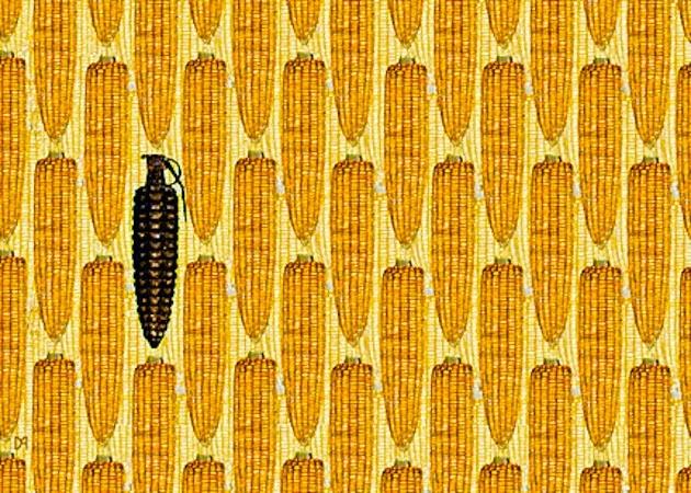maiz anticonceptivo y espermicida
