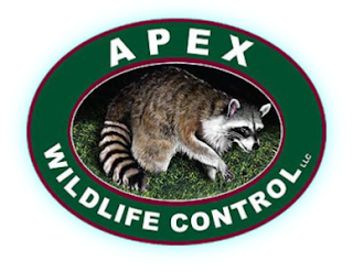 Apex Wildlife Control is a full service wildlife control company in the greater memphis area. Our exclusion services keep critters outside.