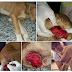 Imagens fortes. Amante dos animais denuncia que elemento vem abusado de cadelas na zona norte de Cajazeiras