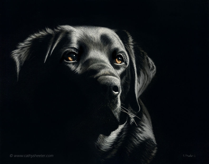 03-Labrador-Retriever-Cathy-Sheeter-Hyper-Realistic-Scratchboard-Wild-Animal-Drawings-www-designstack-co
