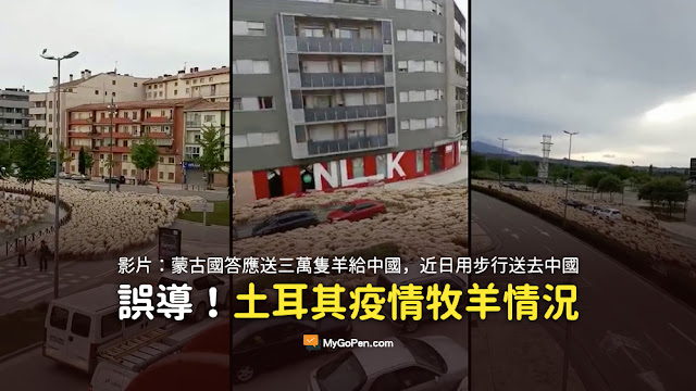 兩個月前新任蒙古國總統訪華 答應送三萬隻羊給中國 近日將羊用步行方式 直接送去中國 謠言 影片